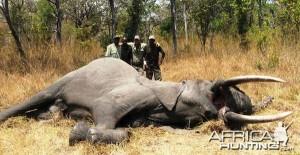 jagen op olifanten Tanzania