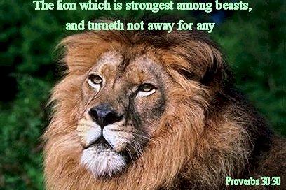 spreuken 30 De leeuw, de held onder de dieren! • spreuken 30