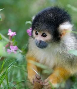 si mono es mio