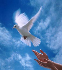 When doves fly December 1, 1997