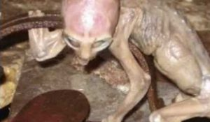 baby-alien-found-alive-in-mexico