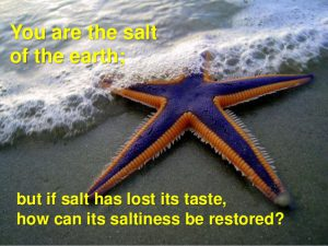 matthew-5-verse-13-you-are-the-salt-of-the-earth